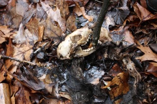 Fur and Bones