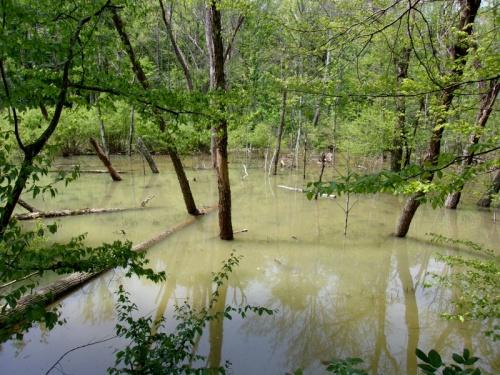 Little Sandy . . . Pond