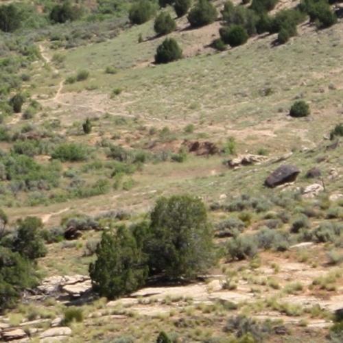 Trail Close-Up